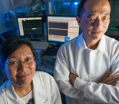 Xuanhong Cheng and James Hwang