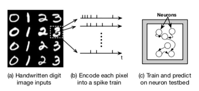 Running image recognition on living neuron testbed