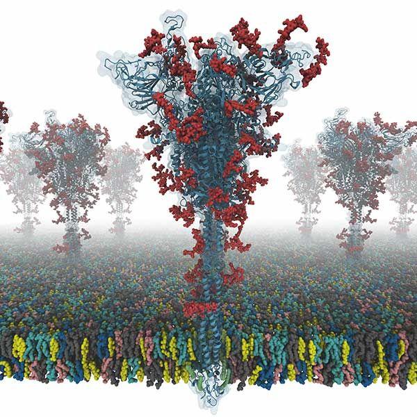 S protein model image COVID-19